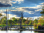 Hdr Photography Pastels - Dead Trees by Jackie Novak