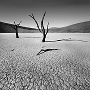 Desert Photos - Dead Vlei by Nina Papiorek