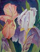 Colored Pencil Metal Prints - Dear Iris Metal Print by Vijay Sharon Govender