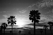 Venice Beach Palms Framed Prints - Dear Venice Beach Framed Print by Irina Caraveo