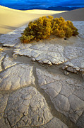 Nps Prints - Death Valley Mudflat Print by Inge Johnsson