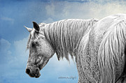 Photo-manipulation Prints - Debbani - The Flea Bitten Mare Print by Karen Slagle