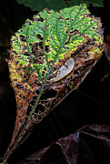 Decaying Prints - Decaying Leaf Print by Robert Ullmann