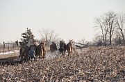 Amish Photos - December Plowing by David Arment