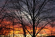 Devon Stewart Metal Prints - December Sunset Metal Print by Devon Stewart
