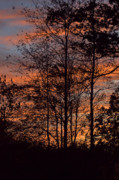 December Sunset In Frog Pond Woods Print by Maria Suhr
