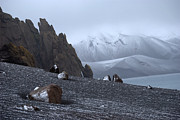 Jenny SW Lee - Deception Island