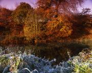 Rivers In The Fall Photo Prints - Deciduous Woods, In Autumn With Frost Print by The Irish Image Collection