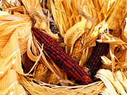 Wicker Baskets Prints - Decorative Corn in a Hand Woven Wicker Basket Print by Chantal PhotoPix
