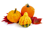 Red Autumn Prints - Decorative pumpkins Print by Elena Elisseeva