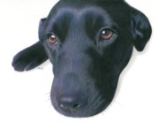 Realism Dogs Art - Dee Dee by Karen Hull