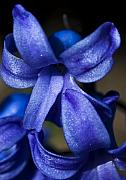 Blue Flowers Photos - Deep Blue Flower by Svetlana Sewell