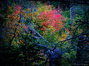 Prescott Posters - Deep Colors of Autumn Poster by Aaron Burrows