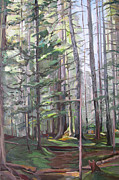 Tall Trees Originals - Deep Forest by Synnove Pettersen