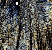 Moonlit Digital Art Prints - Deep In The Moonlit Forest Print by Will Borden