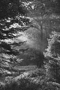 Monotone Prints - Deep In The Woods Print by Jeff Breiman