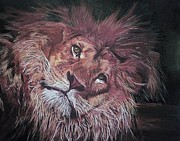 Lion Pastels Posters - Deep In Thought Poster by Mandy Thomas
