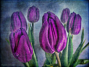 Deep Purple Prints - Deep Purple Print by Lianne Schneider