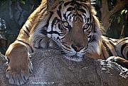Deep Thought Print by KatagramStudios Photography