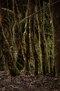 Forest Floor Photos - Deep Woods by Bonnie Bruno