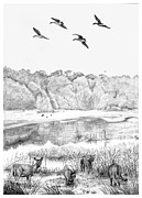 Deer And Geese - Lake Mattamuskeet Print by Tim Treadwell
