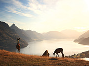 Animals Photos - Deer at sunset by Pixel  Chimp