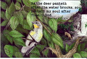 Scripture Drawings - Deer by Woodland Falls  by Karolann Hoeltzle