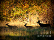 Yellow Leaves Digital Art Prints - Deer Family in Sycamore Park Print by Carol Groenen