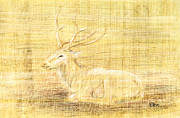 Deer Drawings - Deer by Hakon Soreide
