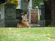 Headstones Mixed Media Prints - Deer in cemetery Print by Bruce Ritchie