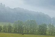 Great Smoky Mountains Prints - Deer in the Smokies Print by Andrew Soundarajan