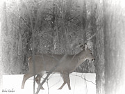 The View Of Art Mixed Media - Deer In The Winter Forest by Debra     Vatalaro