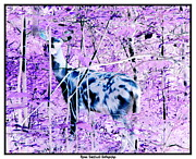 Negative Effect Posters - Deer in the woods inverted negative image Poster by Rose Santuci-Sofranko