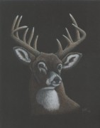 R Alderman - Deer Me