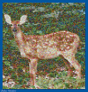 Mosaic Art Mixed Media Framed Prints - Deer Mosaic Framed Print by Debra     Vatalaro