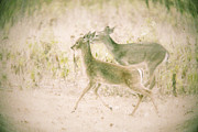 Two Deer Framed Prints - Deer Run Framed Print by Katya Horner