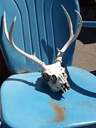 Debi Ling - Deer skull