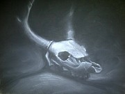 Human Skull Drawings - Deer Skull Study by Stephanie Louden