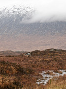 Rannoch Photo Prints - Deer Southern Highlands  Print by Gary Eason