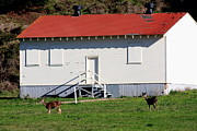 Marin County Posters - Deers at The Old Presidio in The Bay Area Marin Headlands . 40D4237 Poster by Wingsdomain Art and Photography