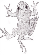 Pollution Drawings - Deformed Frog by Al Buchanan
