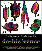 Formal Mixed Media Posters - Dehiscence Poster by Eric Edelman