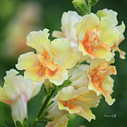 Delphinium Photos - Delectable by Suzanne Gaff