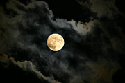 Full Moon Art - Delicate Balance by Kristin Elmquist