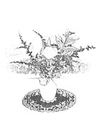 Flower Still Life Prints Prints - Delicate Black and White Print by Barbara S Nickerson