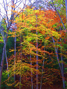 Fall Trees Posters - Delicate Colors Poster by Vijay Sharon Govender