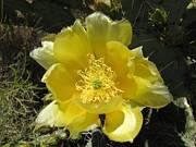 Delicate Desert Flower Print by FeVa  Fotos