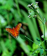 Nature Picture Prints - Delicate Flight Print by Skip Willits