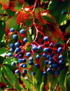 Decor Nature Photo Prints - Delicious Berries Print by Gerlinde Keating - Keating Associates Inc