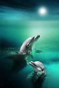 Julie L Hoddinott - Delightful Dolphins